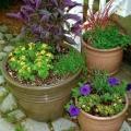 Jardinage Creative [réutiliser et enregistrer]
